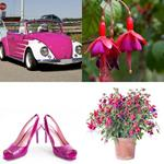 solution FUCHSIA
