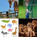 solution ZOO