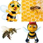 solution ABEILLE